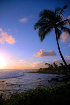 Maui Sunset Hawaiian SunsetHawaiian Palm Tree at by carensilvestri, $25.00