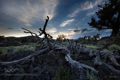 Twisted by RHMiller #nature #travel #traveling #vacation #visiting #trip #holiday #tourism #tourist #photooftheday #amazing #picoftheday