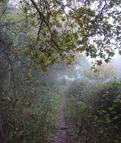 Frith Wood in England - this area was the setting for drama throughout the early 19th century, where French prisoners were held during the Naploeonic Wars. One woman fell in love with a prisoner here but was beaten to death by her own father and brother as punishment. She is still seen running frantically through the trees and is heard sobbing by visitors.