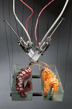 Octopodal Procedures Inject3