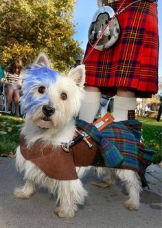 Handmade Braveheart/William Wallace costume for your Westie or Scottie Dog. Perfect for West Highland or Scottish Terriers at Halloween, Highland Games, or any other fun occasion. Costume is handmade to order. Comes with shirt attached to hand made kilt, sash, and leather strip to hold sword. Costume can be ordered with or without sword. Blue Halloween hair spray should be used for your dogs face (spray is not included with costume).  Only measurement required is length from collar to ba...