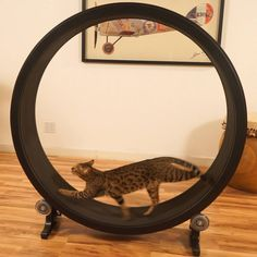 One Fast Cat - Cat Exercise Wheel