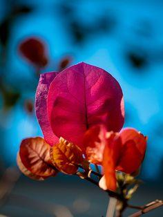 { Paper Flowers - Leaves on Fire III }