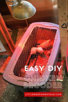 Chicken Garden, Chicken Life, Small Chicken, Backyard Chicken Coops, Chickens Backyard, Backyard Ducks, Backyard Poultry, Chicken Brooder Box, Chicken Boxes