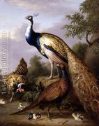 Peacock, Hen and Cock Pheasant in a Landscape by Tobias Stranover Oil Painting Reproductions, Animal Paintings, Peacock, Whale, Marie, Art Gallery, Fiction, Poetry, Landscape