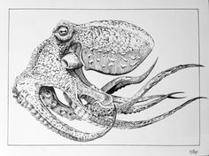Practice pen and ink drawing for intro to illustration assigment. Ink Pen Art, Ink Pen Drawings, Realistic Drawings, Animal Drawings, Octopus Drawing, Octopus Art, Sea Life Art, Plant Drawing, Ink Illustrations