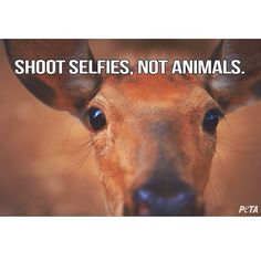 Exactly. I will NEVER understand hunting. To look inside the eyes of innocent animals and kill them? :-(