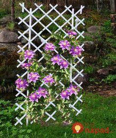 Krásne nápady, vďaka ktorým budú vaše kvety v záhrade žiariť. Či už ich pestujete v črepníkoch, alebo voľne v pôde, prinášame vám skvelé tipy, ako si ich krásu užiť ešte viac. Neváhajte a inšpirujte sa krásnymi nápadmi. Na mnohé z nich využijete veci, ktoré sa vám možno bez úžitku povaľujú v garáži alebo v pivnici!... Landscape Design, Garden Design, Vegetable Bed, Creative Food Art, Stone Houses, Flower Beds, Trellis, Lush, Projects To Try