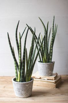 Kalalou Artificial Aloe Plant With Cement Pot