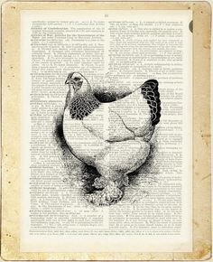 Hen  vintage hen artwork printed on page from old par FauxKiss, $10.00