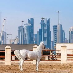 Good Morning #Doha  #Qatar @snappster #Qatrism