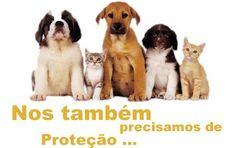 Governor: Create an Office for the Protection of Animals in Pernambuco Governador: Crie uma Delegacia de Proteção aos Animais em Pernambuco