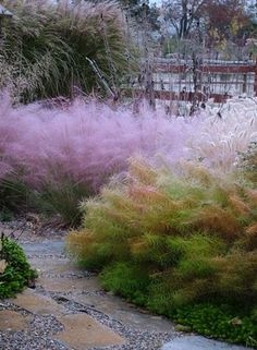 Beautiful, soft textures, amsonia hubrichtii and muhlenbergia in courtyard