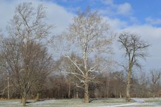 Treasured Traditions: #Project365: Winter in the Midwest Continued