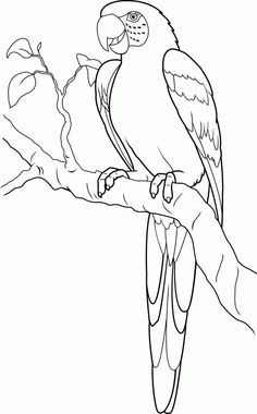 Parrot Coloring Page Animals Town Color Sheet