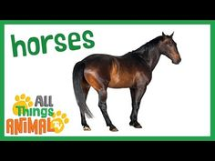 HORSE: Animals for children. Kids videos. Kindergarten | Preschool learning - YouTube