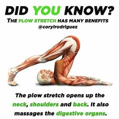 The Plow Stretch  Did You Know _ Follow @ejmfittips for DAILY fit tips & motivation _  & post: @corylrodriguez _ Another awesome stretch you can add in to your routine! . Plow Pose opens the neck shoulders and back. By compressing the abdomen it massages and tones the digestive organs which improves detoxification. This pose stimulates and regulates the thyroid gland relieves excess phlegm and mucus and regulates the breath _ TAG-SAVE-SHARE with someone that LOVES yoga _ #yogapose…