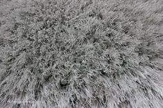 Pearl Silver Circle Rug (texture close up), a super soft heavyweight shaggy rug made of thick & thin yarns (7cm pile height, 100% polyester, hand-tufted) http://www.therugswarehouse.co.uk/round-rugs/pearl-circle-rugs/pearl-silver-circle-rug.html #rugs #shaggyrugs #roundrugs
