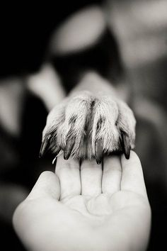 Hand in Paw, Best of Friends.