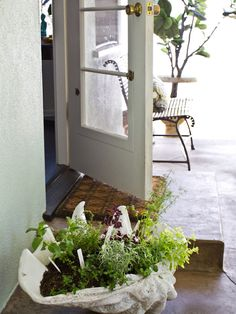 This is a good HGTV tute about container herb garden. Many herbs are enhanced when grown together, and some can cross polinate for the worse or just can't share the same soil.