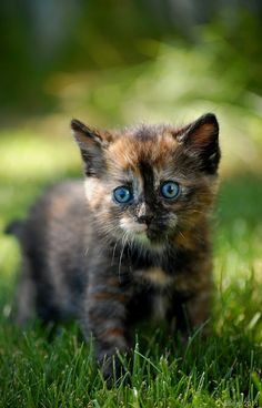 Lovely blue kitty eyes!