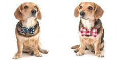 Bow ties for dogs? Lifestyle tip by Prague Stay
