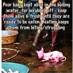 #YulinGetDogsOffTheMenu In #CHINA JUNE 21st DoG EATING FESTIVAL. they do this to other animals also, like rabits, keep them alive in torture so they can advertise Fresh Meat - eating meat is evil and ungodly