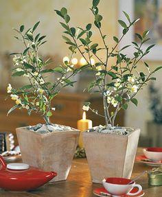 Fin artikel om indendørs krydderurter m.m. også the planter. Spiseligt og hyggeligt.