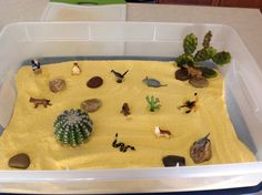 Desert small world, corn meal with fake cacti, rocks, and Toob plastic toys