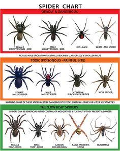 These Are Australia's Most Dangerous Spiders [Infographic] | Lifehacker Australia