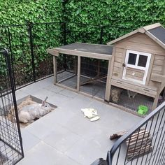 Bunny Room, House Rabbit, My Little Baby, Outdoor Furniture Sets, Outdoor Decor, Guinea Pigs, Rabbits, Patio, Home Decor