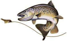 Aquatic Addiction - Fishing Decal Sticker Brown Trout Aquatic Addiction , $11.99 (http://www.aquaticaddiction.com/fishing-decal-sticker-brown-trout-aquatic-addiction/)