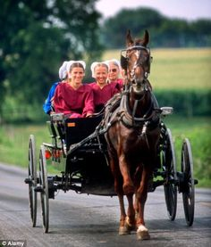 Amish women drive their horse and buggy