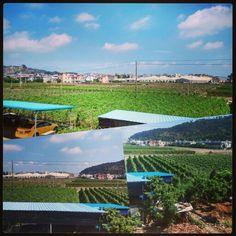 Gackernde Hühner, zwitschernde Vögel, frische Luft! Nicht weit von Shenzhen entfernt liegt Huizhou und Dongguan, wobei viele kleine Dörfer eine wirkliche Erholung zum hektischen Stadtleben ist.   Wie verbringt Ihr Eure freien Tage?   #shenzhen #dongguan #huizhou #china #stadtflucht #landflucht #blue #sky #huhn #chicken #car #animals #plants #instatravel #instalike