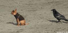 Der arme Hund | DEBESTE.de, Lustige Bilder, Sprüche, Witze und Videos