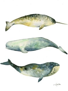Whales stacked watercolor whale painting by by TheDailyWatercolor