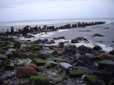 Aan de voet van de Waddenzeedijk bij Oosterland