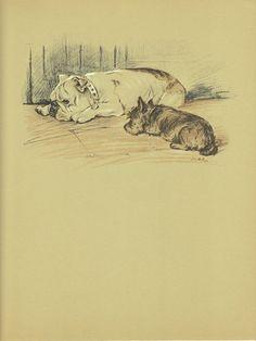 BULLDOG Dog Print, 1930s Lucy Dawson, Terrier, Black White, Brown Sepia, Home Decor, Animal Print, Art Illustration to Frame, plate, B-1