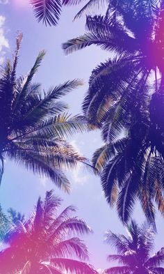 35 Ideas for pineapple wallpaper iphone backgrounds palm trees Frühling Wallpaper, Tree Wallpaper Iphone, Lock Screen Wallpaper Iphone, Summer Wallpaper, Cute Wallpaper Backgrounds, Pretty Wallpapers, Aesthetic Iphone Wallpaper, Nature Wallpaper, Aesthetic Wallpapers