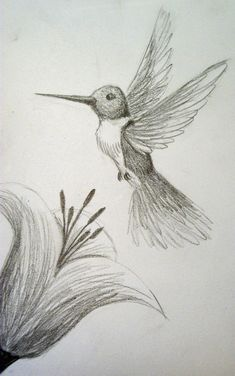 Cute Lil' Hummingbird by on DeviantArt Nature Sketches Pencil, Art Drawings Sketches Simple, Bird Drawings, Pencil Art Drawings, Animal Drawings, Cool Drawings, Art Sketches, Simple Drawings Of Nature, Pencil Sketches Of Flowers