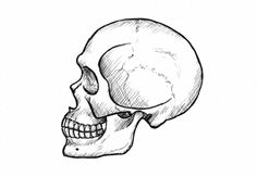 What You'll Be CreatingIn this tutorial I will show you how to draw a human skull from scratch, step by step. I will explain every little detail of the drawing, and the perspective will be really...