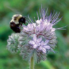 Bee's Friend