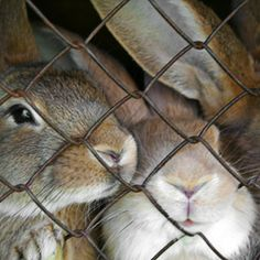 Tell L'Oreal to stop using animals for harmful cosmetic testing.