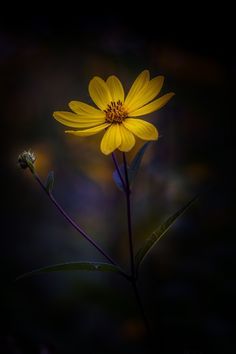 Waiting For You by Paul Barson / Flower Images, Flower Pictures, Flower Art, Amazing Flowers, Pretty Flowers, Yellow Flowers, Beautiful Flowers Wallpapers, Beautiful Nature Wallpaper, Flowers Gif