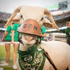 Passing the torch. Introducing CAM 25. We're excited to watch him grow up! Sadly, CAM 24 passed away peacefully of natural causes this weekend. We're thankful for the many memories he shared with our Ramily.