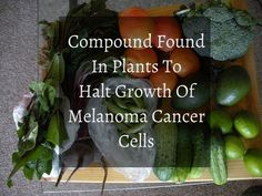 Compound in Plants Found to Halt Growth of Melanoma Cancer Cells - Scientists from the Texas Biomedical Research Institute have found for the first time that a natural, plant-derived substance known as gossypin is capable of treating the deadliest form of skin cancer – melanoma.
