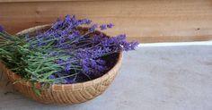 Es gibt wenige so universell nützliche Pflanzen wie Lavendel. In diesem Beitrag zeigen wir dir unsere Lieblingsanwendungen!                                                                                                                                                                                 Mehr
