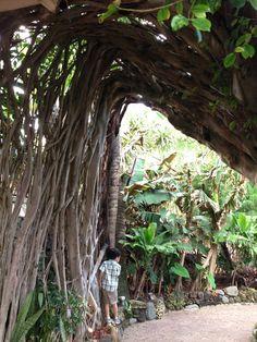 Mama's Fish House in Maui