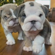 #dog #dogs #pet #doglover #doggy #puppy #puppies #puppys #dogoftheday #doglove #dogphotography #dogvideos #dogvideo