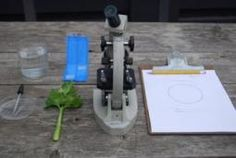 Microscope Observation Lab | The Edible Schoolyard Project